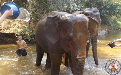 Organiza la visita al Elephant Nature Park
