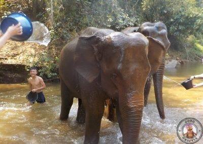 Baño con los elefantes