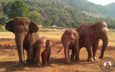 Visita al Elephant Nature Park
