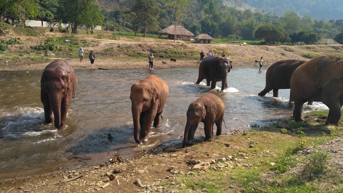 Visita al Elephant Nature Park en Chiang Mai