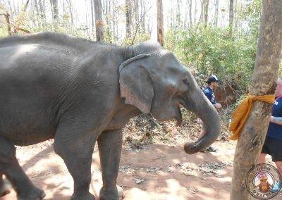 Paseo con los elefantes