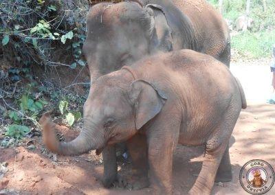 Visita de los elefantes mas jóvenes