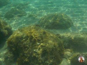 Snorkel en Ibiza - Cala D'Hort