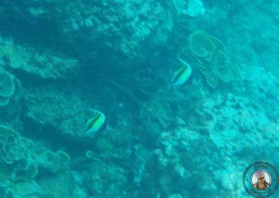Snorkel en Bida Nok