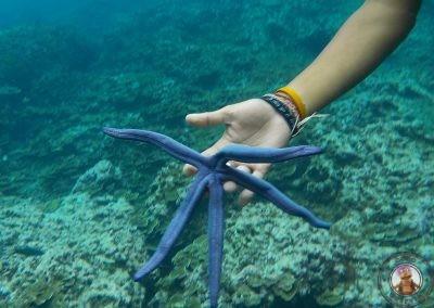 Snorkel en Bida Nok - Estrella de mar