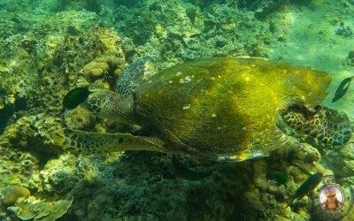 Snorkel en Tailandia – Bida Nok