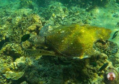 Snorkel en Bida Nok - La tortuga tenía el caparazón roto