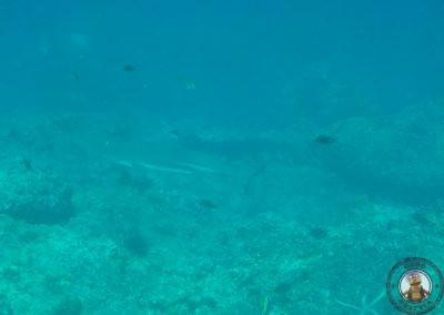 Snorkel en Bida Nok - Tiburón