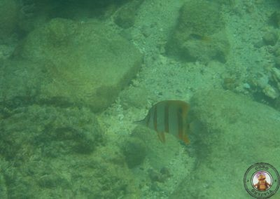 Snorkel en la excursión 4 islas