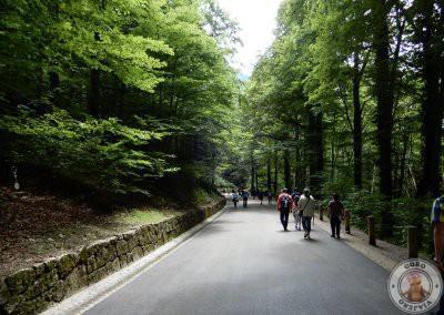 Camino a pie y en coche de caballos hacia Castillo de Neuschwanstein