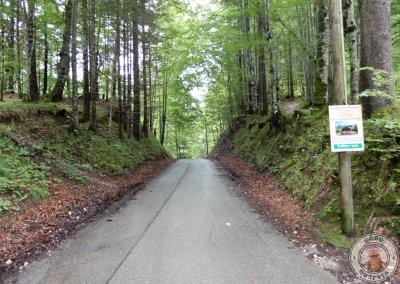 Camino paralelo al del puente para ver Marienbücke y el castillo de fondo