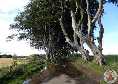 The Dark Hedges - Imprescindibles en Irlanda del Norte