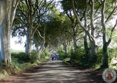 The Dark Hedges, el Camino Real en Juego de Tronos