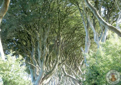 Hayas en The Dark Hedges