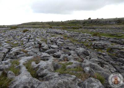 La vegetación se abre paso en The Burren