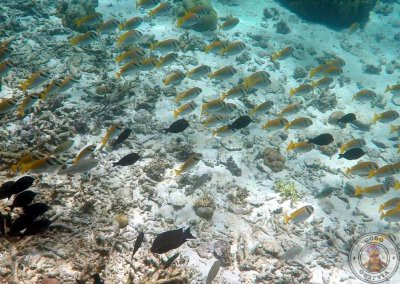 Snorkel junto a Shimizu Island