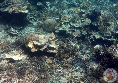 Snorkel en Entalula Island
