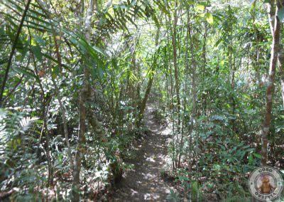 Caminos por la zona de tarsiers del Santurario de Corella