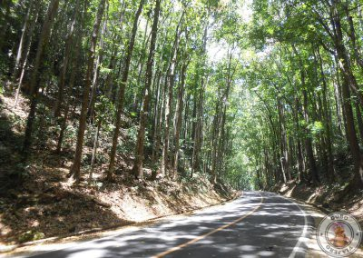 Carretera del Man Made Forest en Bohol
