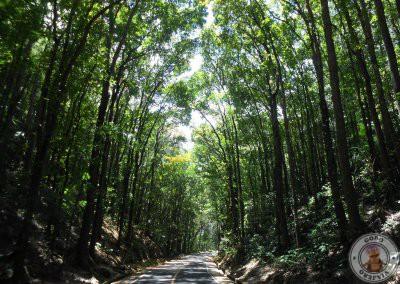 Man-Made Forest - Segunda parada del recorrido por Bohol