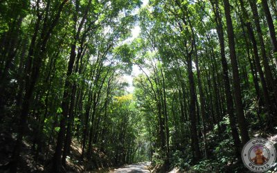 Man Made Forest en Bohol
