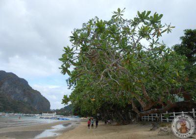 Paseo por la Playa de Corong Corong