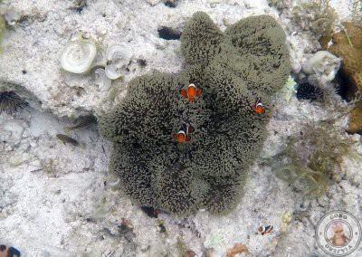 Nuestros primeros «Nemos» en Filipinas