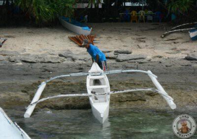 Señor que nos llevó a la zona de snorkel en Balicasag