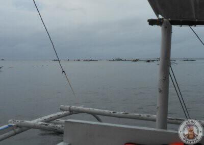 Snorkel en Balicasag con Bohol Nature tours