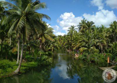 Bent Palm en Massin Bridge