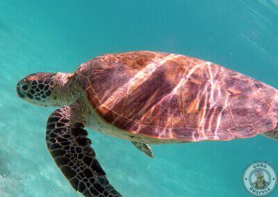 Nadando con tortugas en Port Barton