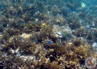 Snorkel en Port Barton